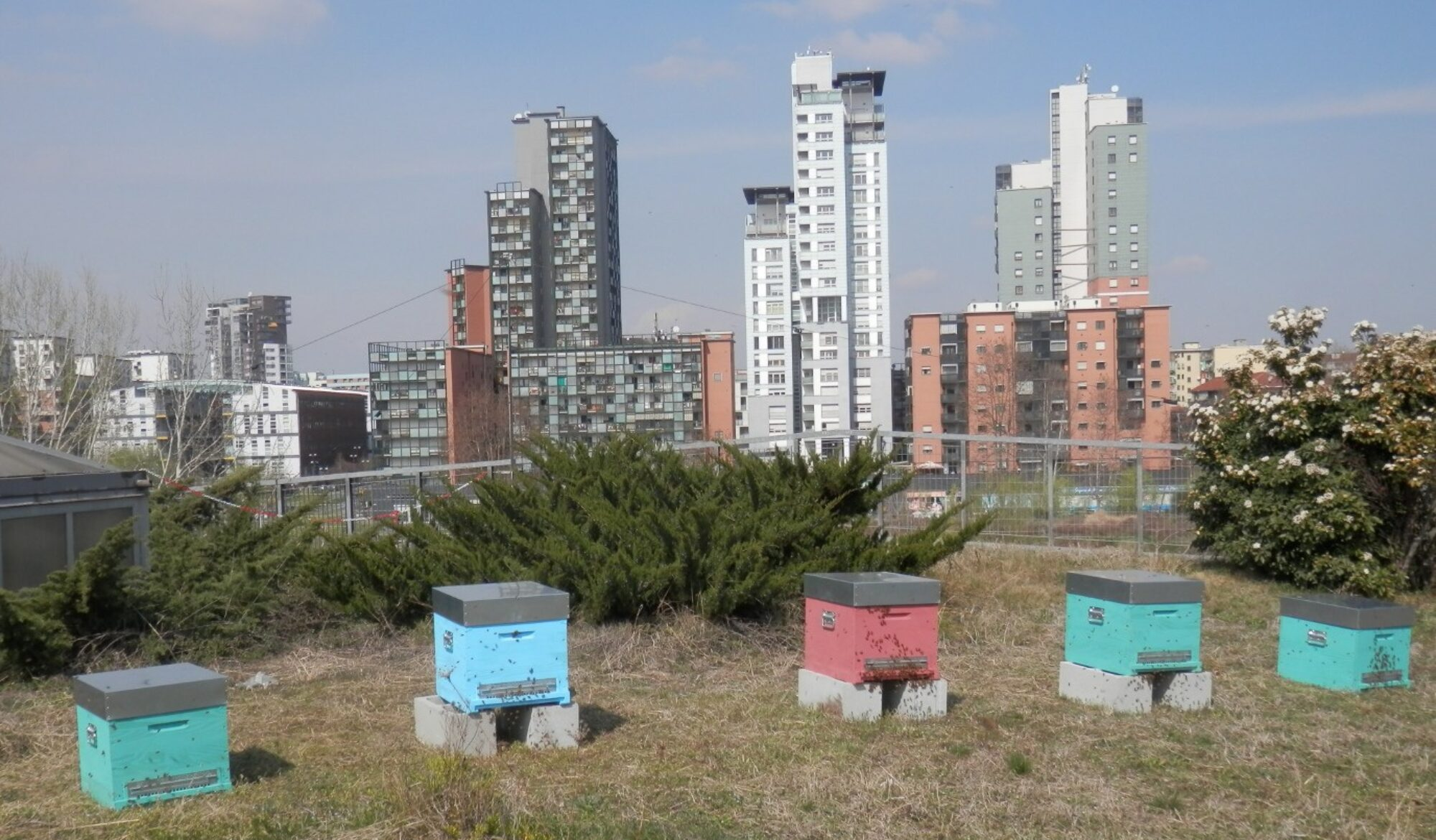 Apicoltura urbana come educazione all'ambiente e inclusione sociale
